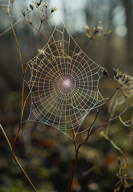 web in the forest